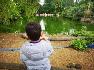 Cotswold Wildlife Park - Flamingos